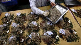 A worker prepares traditional Chinese herbal medicines at Beijing's Capital Medical University Traditional Chinese Medicine Hospital May 25, 2011. Cleveland Clinic in Ohio is now offering similar medications for some patients. (REUTERS/David Gray)