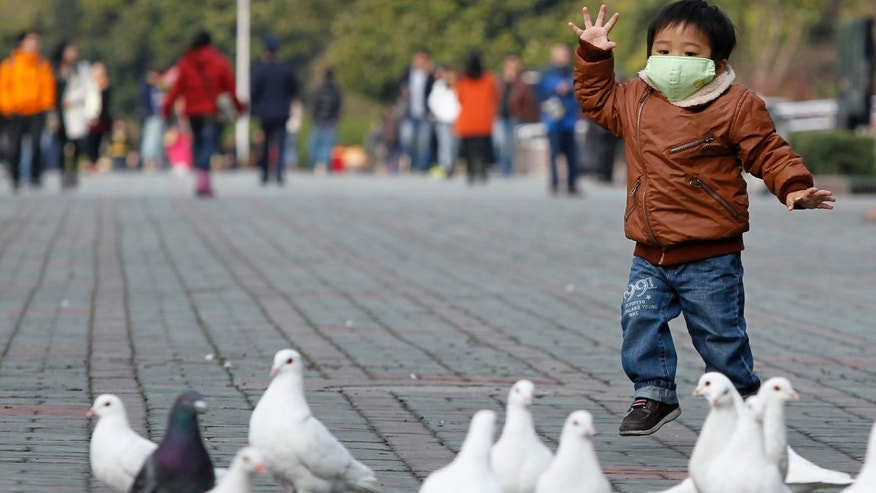 A boy looks at pigeons at a public park in People Square, downtown Shanghai.