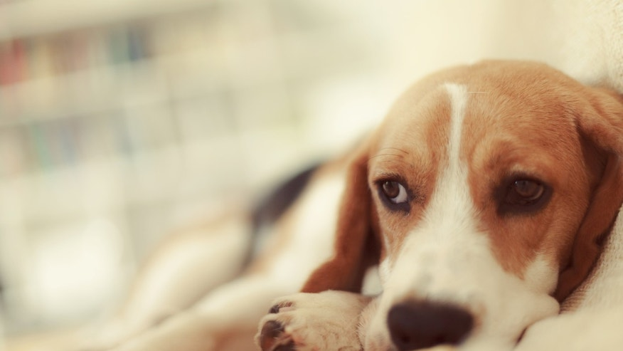 Euthanasia Drug Found In Recalled Dog Food