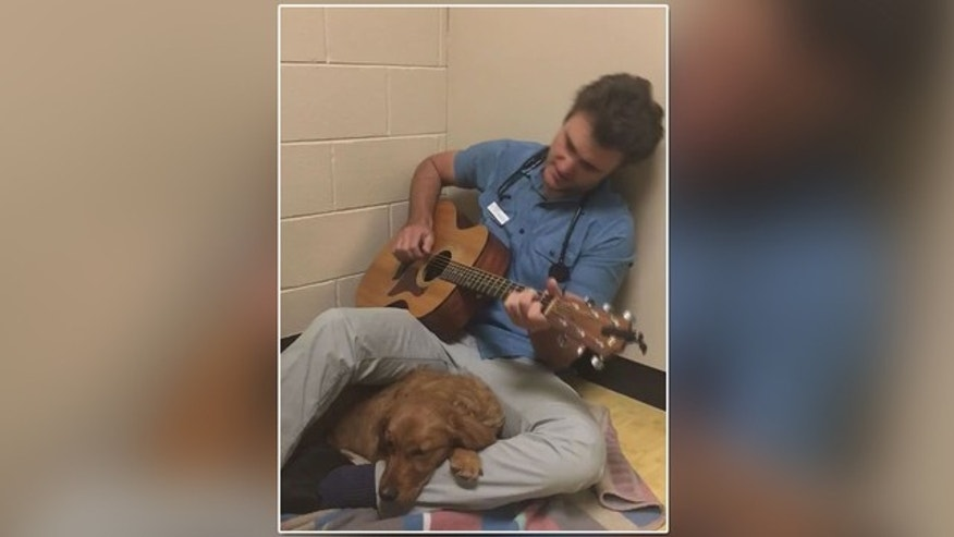 Veterinarian sings to nervous dog before surgery