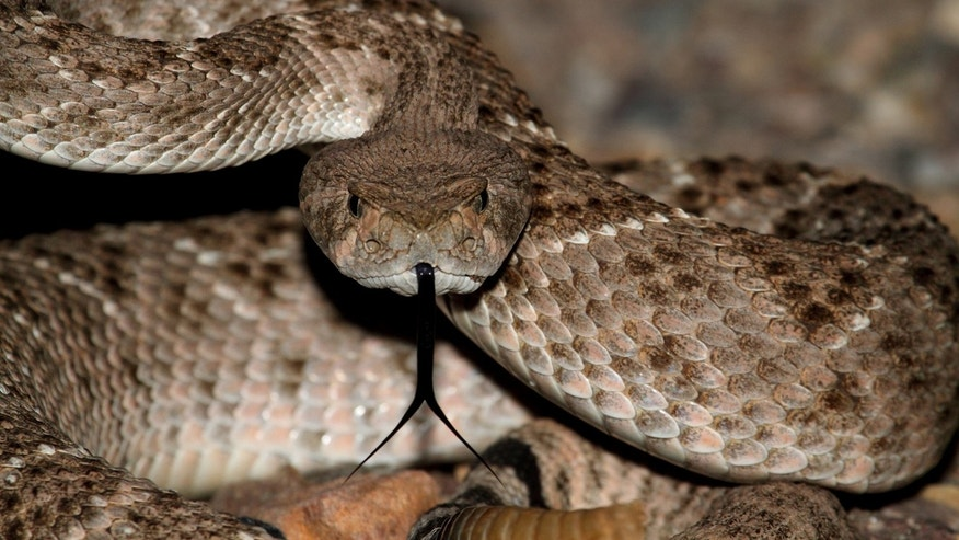 Police did not say what type of snake allegedly bit the teen.