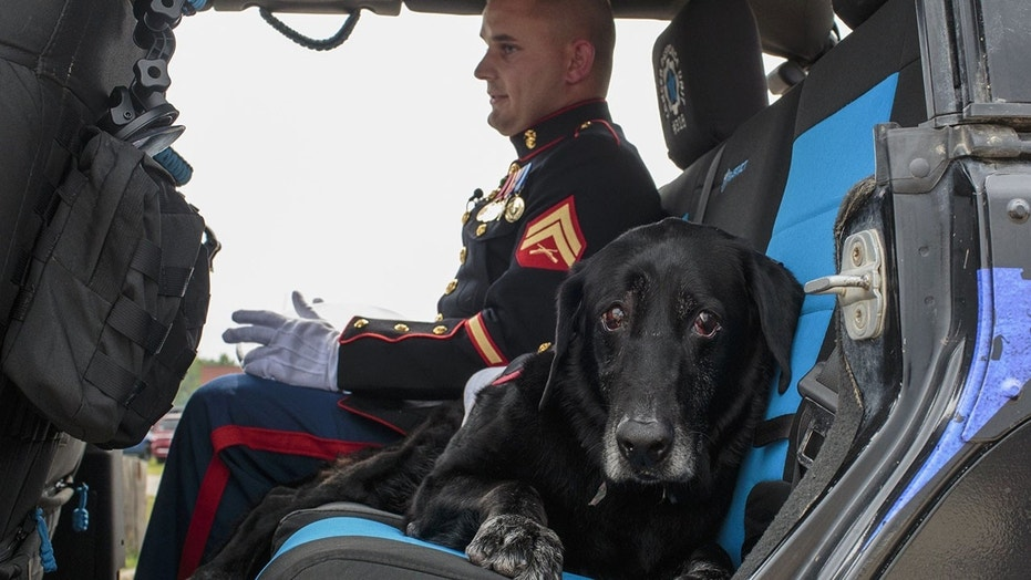U.S. Marine veteran Lance Cpl. Jeff DeYoung and Cena, a military service dog, take one last ride.