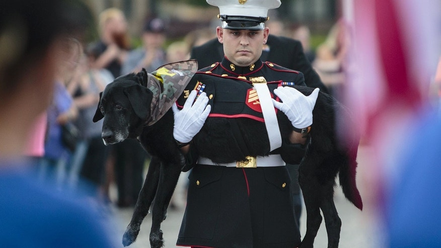 Terminally ill service dog given emotional send-off before being put to sleep