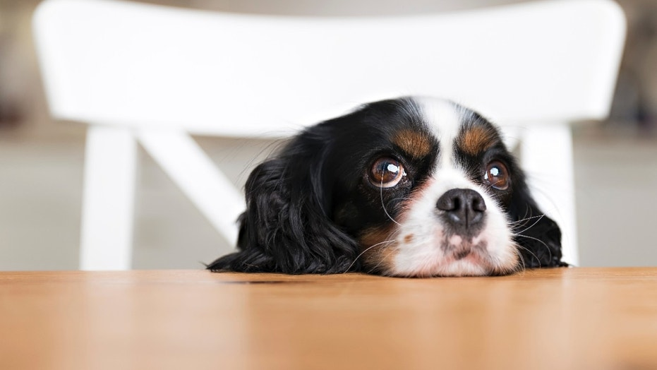 Food Poison Symptoms In Dogs
