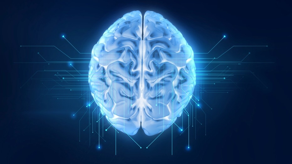 Elderly Adults Grow As Many New Brain Cells As Teenagers Do Study