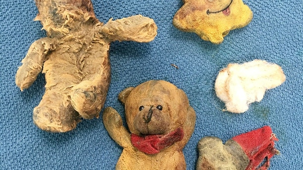 """The chewed up teddies. The owners of a sick St Bernard dog were left stunned when a mass which vets thought was cancer turned out to be four half-chewed TEDDY bears.  See ROSS PARRY story RPYDOG.  Maisy, who bears similarities to loveable pooch Beethoven in the series of comedy films written by John Hughes, had the soft toys removed during an intricate procedure.  The eight-year-old now has a """"new lease of life"""" and is thriving at home, say her relieved owners who admit they feared the worst.  They today (fri) revealed how a CT scan showed Maisy had an unusually full stomach and a mass on her spleen – an issue which was initially put down to her food not being digested properly.  This led her vet to diagnose possible cancer and the adorable dog was rushed in for surgery to remove her spleen.  But in an amazing twist, during the operation a vet found Maisy had actually devoured four teddy bears which had become lodged in her stomach.  Thankfully, Maisy has fully recovered following the cancer scare and a histology report has shown no signs of cancer."""