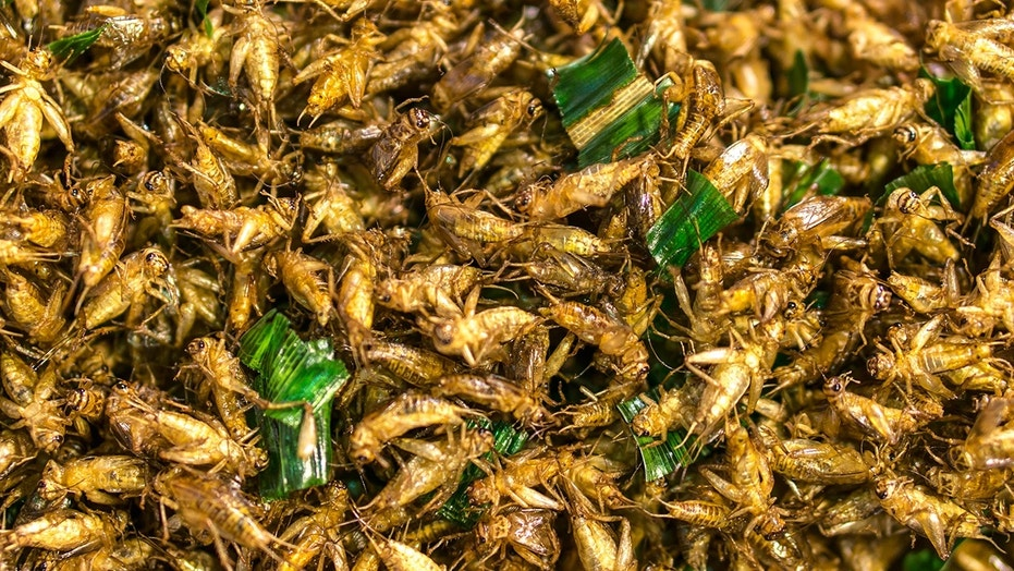 The study examined 20 healthy adults, aged 18 to 48, over a six-week period in order to assess the effects of eating cricket powder.