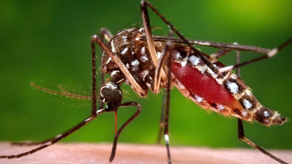 Reports of brain and nervous system infections are more reliable indicators of the seriousness of West Nile than statistics for influenza-like West Nile fever or asymptomatic infections that most commonly occur in people who donate blood