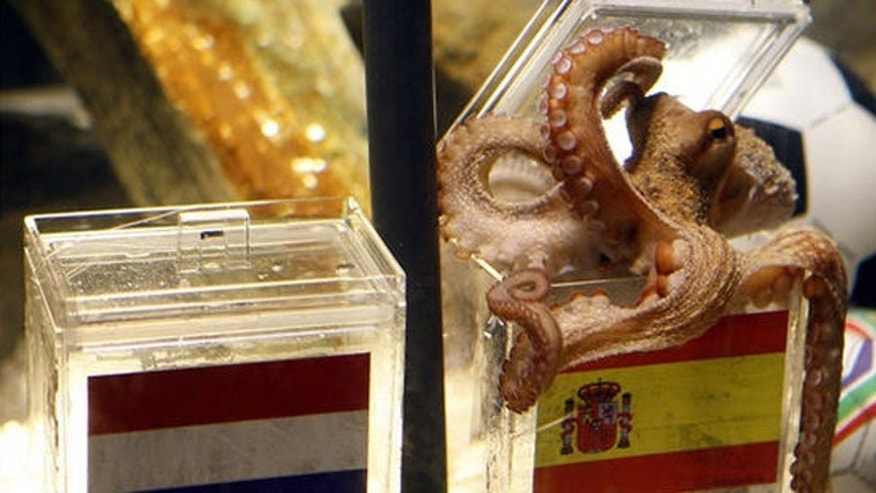 Paul the Octopus died October 2010, just months after he predicted Spain's victory in the final game of the World Cup.