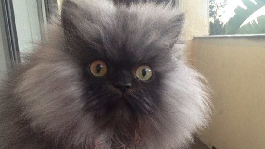 Facebook: Colonel Meow