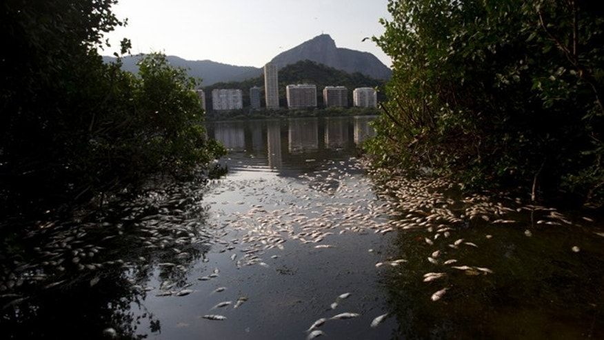 Dead fish float on the Rodrigo de Freitas lagoon in Rio de Janeiro, Brazil, Monday, April 13, 2015. Rio de Janeiro's waste management company is cleaning up dead fish after a die-off at a lake that's slated to hold Olympic rowing competitions during the 2016 games. The city's environmental secretariat said the latest incident is the result of recent rains and high sea levels, which caused the lake's water temperature to plummet. (AP Photo/Silvia Izquierdo)