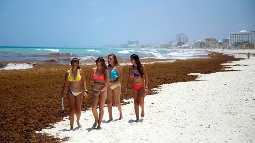 Tourists walk past large quantities of seaweed piling up on the beach in the Mexican resort city of Cancún, Mexico, Wednesday, July 15, 2015. The seaweed invasion, which appears to have hit most of the Caribbean this year, is generally considered a nuisance and has prompted some hotel cancellations from tourists but scientists consider washed-up seaweed an important part of the coastal eco-system and plays a role in beach nourishment although some scientists have also associated the large quantities of seaweed this year in the Caribbean region with higher than normal temperatures and low winds, both of which influence ocean currents, and they draw links to global climate change. (AP Photo/ Israel Leal)