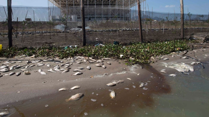 Fish carcasses litter the Jacarepagua lagoon shore in front of Olympic Park, in Rio de Janeiro, Brazil, Saturday, Aug. 29, 2015.