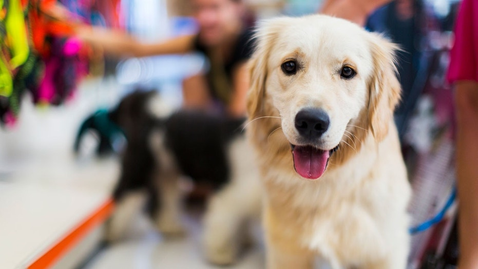 California pet stores face new restrictions on the pets they sell