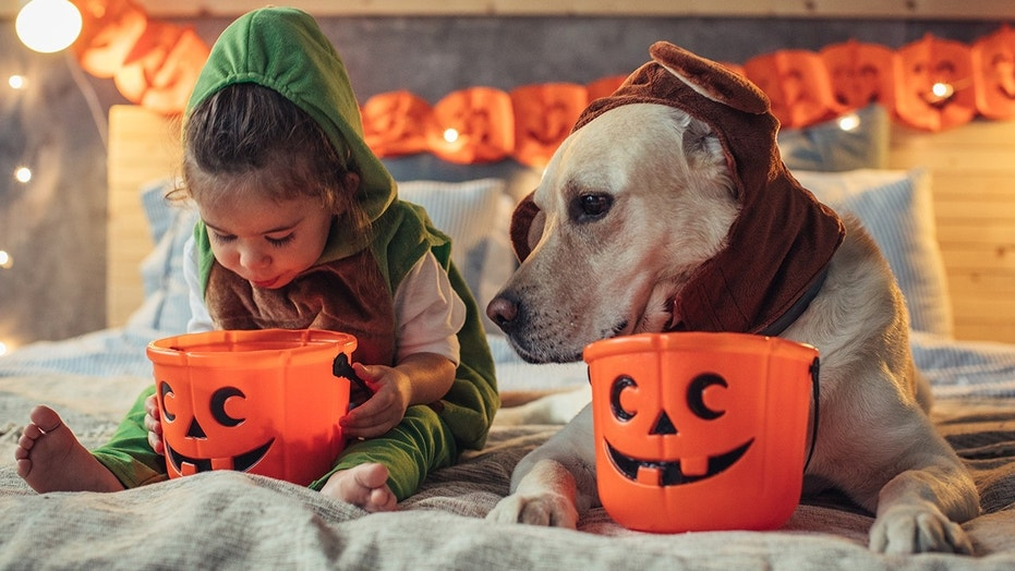 You don't want the kids to eat ALL of it, after all. (And your dogs shouldn't have ANY.)