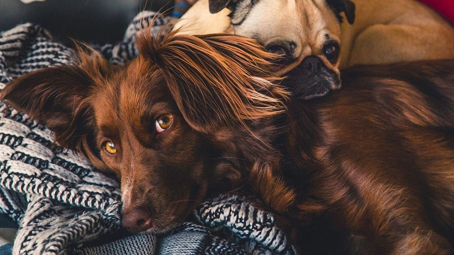 More than half of Americans say they've skipped hanging out with other humans to stay home with a pet.