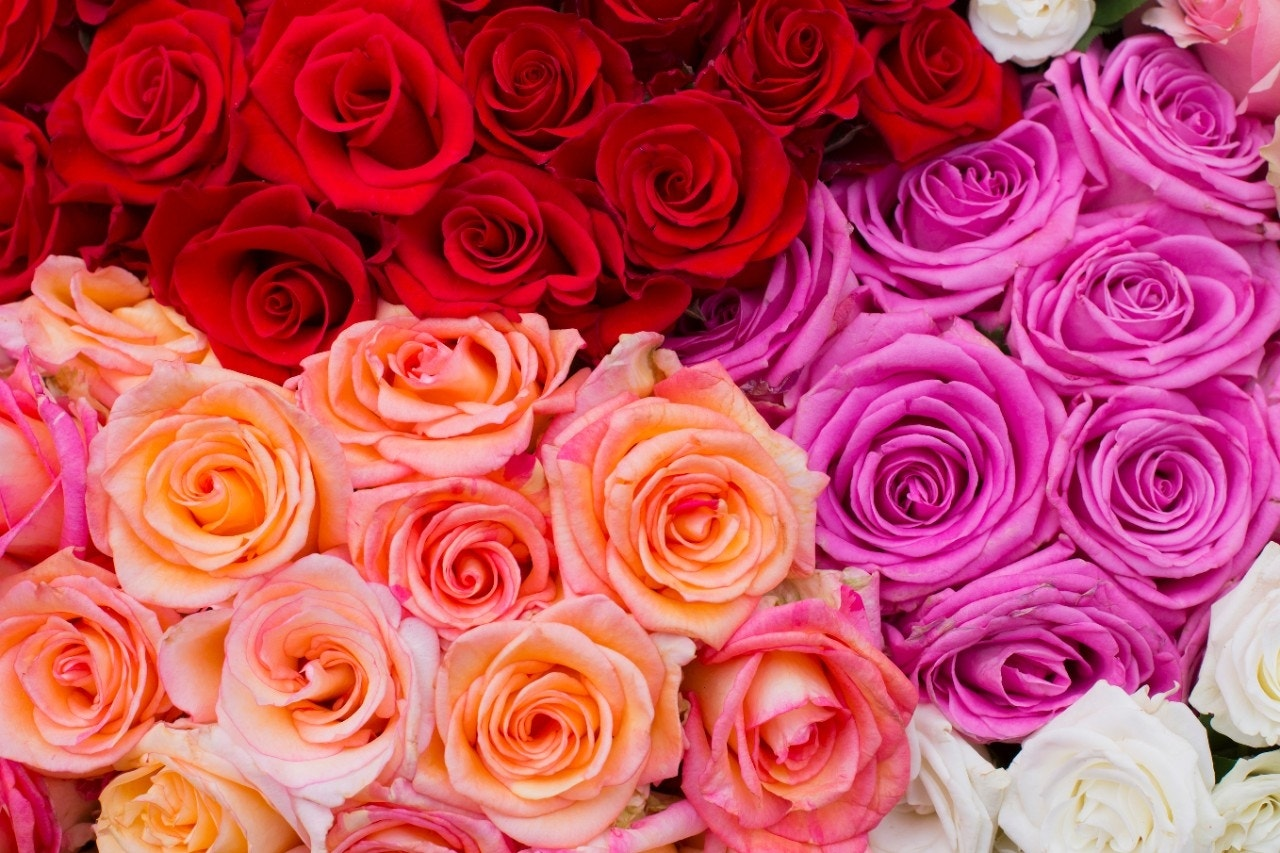 Best Valentines Day Flower Deals At Grocery Stores