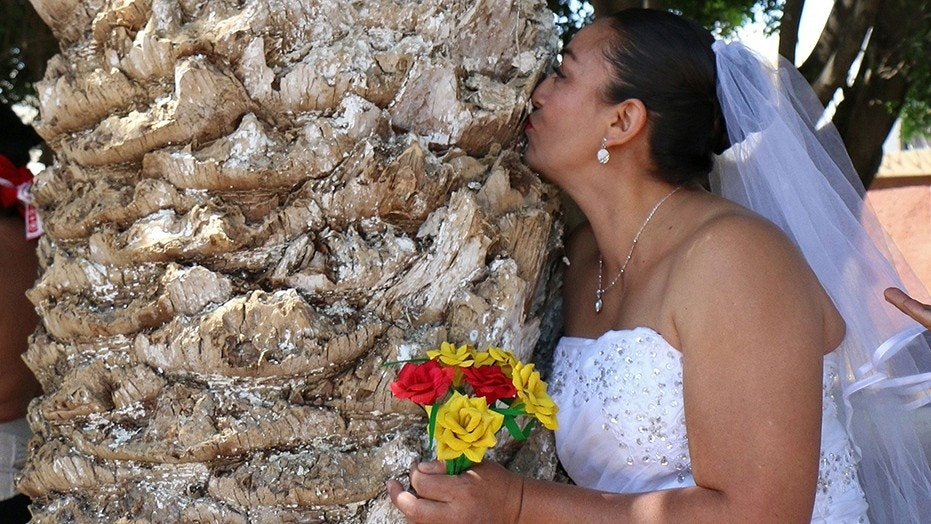 Women in Mexico are getting hitched to trees as a way to call attention to illegal logging that is devastating their state of Oaxaca.