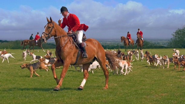 Fox hunters and hounds in the English countryside