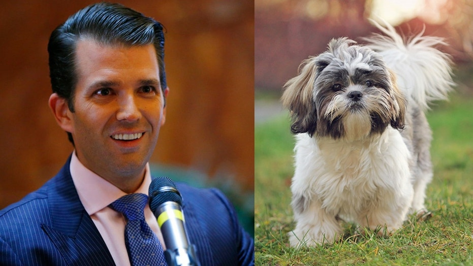 The new Trump pup has yet to be named.