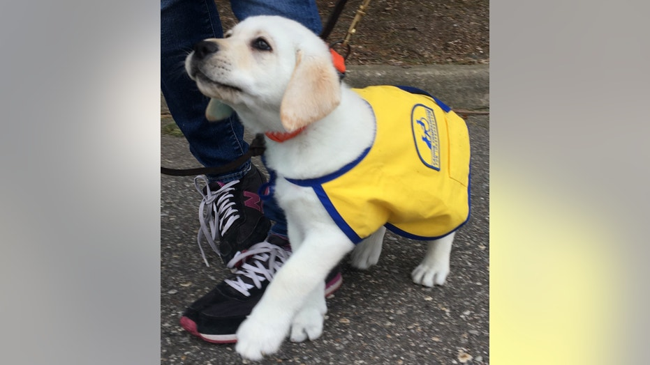 Getting your pup on a schedule is crucial — especially if he's a service dog like Spike.