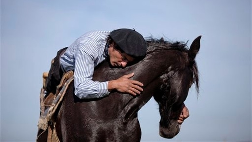 In this May 29, 2014, photo, Martin Tata embraces his horse Milonga on a ranch in San Antonio de Areco, Argentina. Tata is a self taught  horse trainer. For the past 11 years he has been showcasing his unique bond with horses through performances to tourists from around the world. Born and raised on a ranch in the traditional gaucho-town of San Antonio de Areco, around 110 kilometers outside of capital Buenos Aires, Tata has lived and worked amongst horses his entire life.  (AP Photo/Natacha Pisarenko)