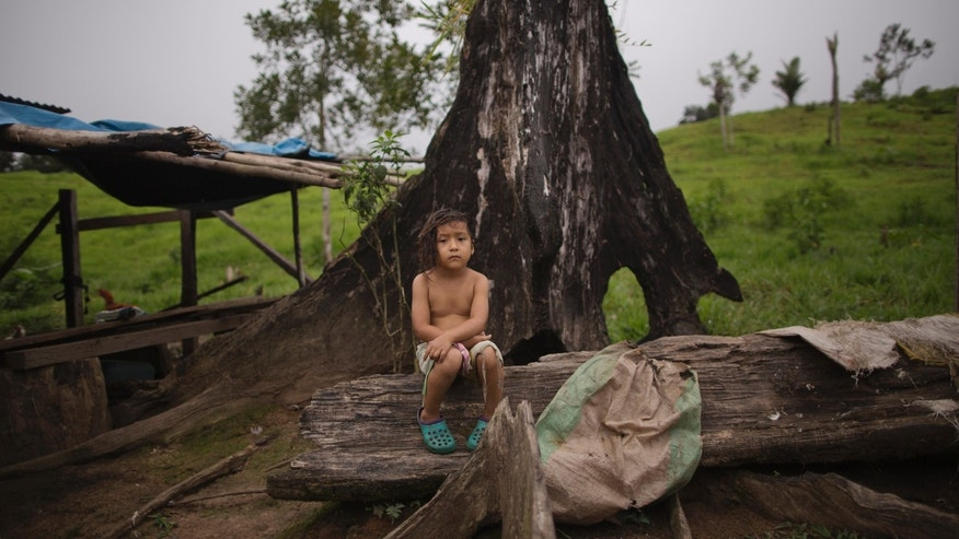 In this July 18, 2015 photo, four-year-old Isbeth Estela rests on a dead tree outside her home in Nuevo Canaveral, Peru, an area where framers' coca crops were pulled up by a government drug eradication program. Estela lives with her grandfather, mother and brother on a farm where they grow coca and raise pigs and chickens. Coca destruction in 2013-2014 marked a 30 percent decrease in land planted with coca, and the government says it's on pace to destroy nearly two-thirds as much this year. (AP Photo/Rodrigo Abd)