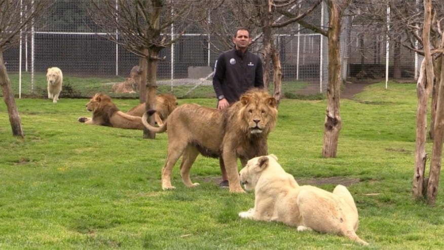 Black Panther White Lion Foundation founder Eduardo Serio with some of his 260 charges.