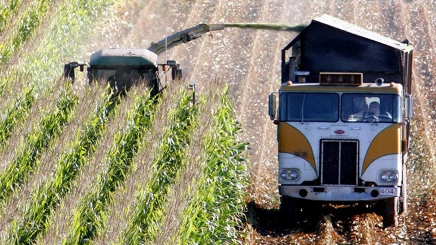 October 2005: A harvester works through a field of genetically modified corn near Santa Rosa, Calif.