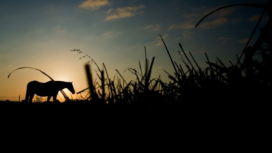 FILE -- Aug. 20, 2014: A horse grazes on a pasture near Sehnde, northern Germany, at sunrise.