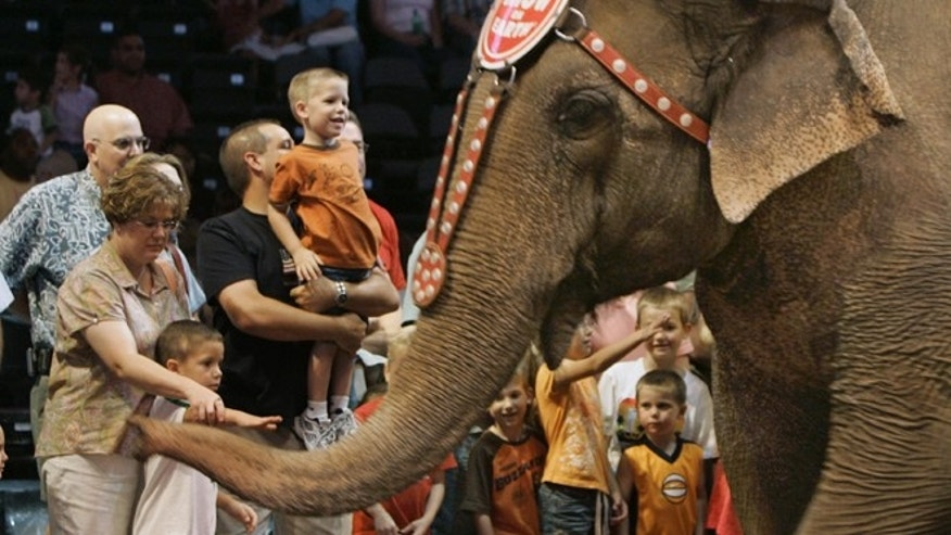 FILE - In this June 9, 2006 file photo, spectators reach out to touch an elephant as she walks by during the Pre-Show of the Ringling Bros. Barnum & Bailey circus in Oklahoma City. On Thursday, March 5, 2015, the circus announced will phase out the show's iconic elephants from its performances by 2018, due to growing public concern about how the animals are treated.