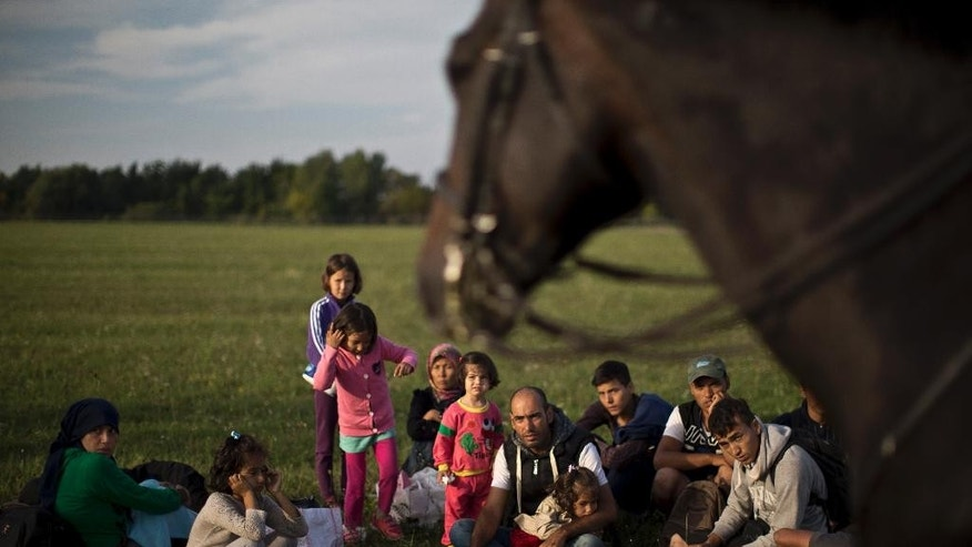 Sept. 16, 2015: Afghan migrants sit on the ground of a field while being detained by Hungarian police on horses for passing through Hungary's border fence with Serbia, in Asotthalom, southern Hungary.