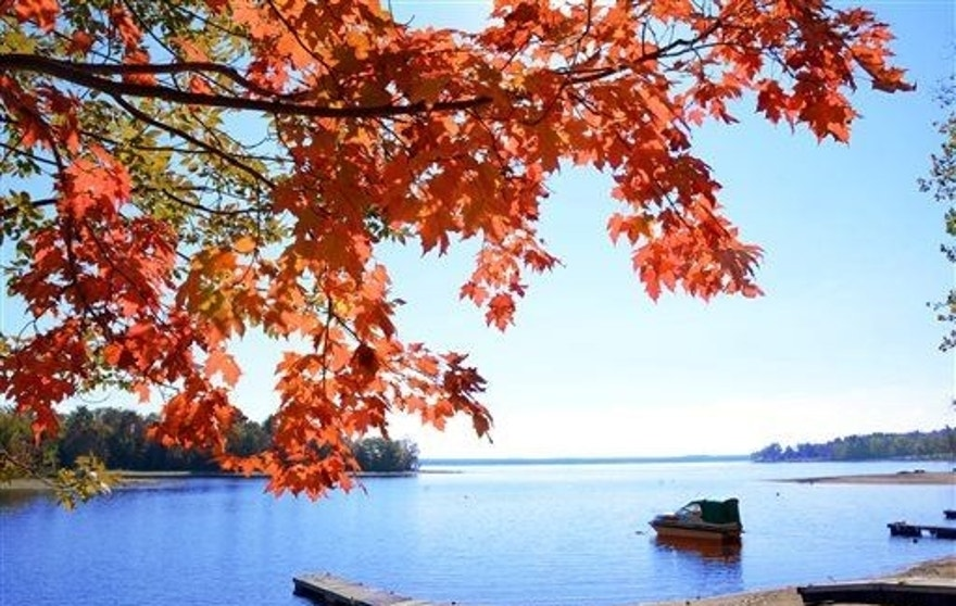 A maple tree along the shores of the Great Sacandaga Lake in Mayfield, N.Y. Wednesday, Sept. 24, 2014.