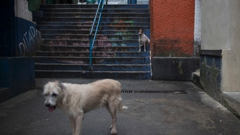 Two dogs stand on the stairs as it rains in the Dona Marta slum during the 2016 Summer Olympics in Rio de Janeiro, Brazil, Wednesday, Aug. 10, 2016. (AP Photo/Felipe Dana)