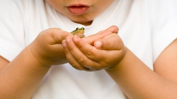 Tiny frog on litle hands.