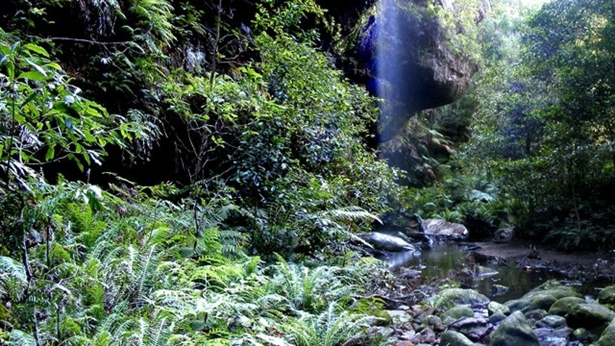 """<a href=""""http://en.wikipedia.org/wiki/File:Forest_in_the_bluemountains.jpg"""">Wikipedia</a>"""