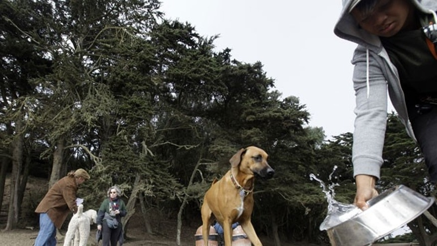 September 29: Owners and their dogs converge at Fort Funston in San Francisco.