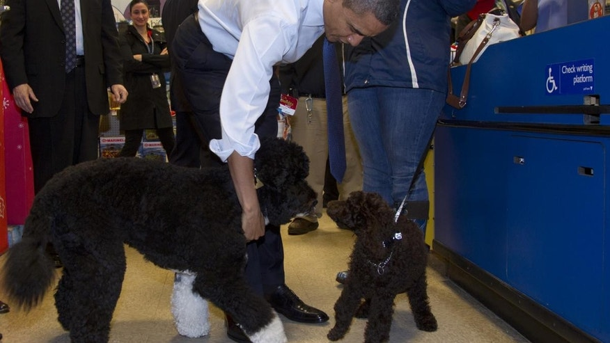 President Barack Obama and his dog Bo visit with a poodle named Cinnamon as they check out at PetSmart, Wednesday, Dec. 21, 2011, in Alexandria, Va. Obama bought the presidential pup a toy bone and a bag of food while Bo played in the store with Cinnamon. (AP Photo/Carolyn Kaster)