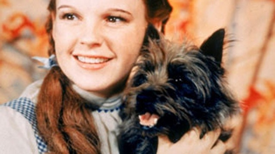 FILE: Judy Garland as Dorothy and Toto in 'The Wizard of Oz.'