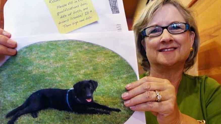 "July 11, 2012:In this photo Brenda Charlston holds a photo of her long-deceased dog, Rosie, and a voter registration form for ""Rosie Charlston"" that arrived in the mail for the canine last month in Seattle."