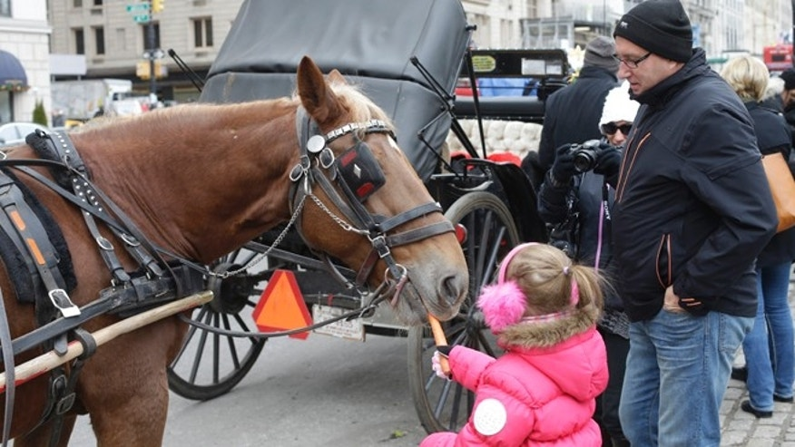 Dec. 31, 2013: A girl feeds a horse near Central Park on New Year's Eve day.