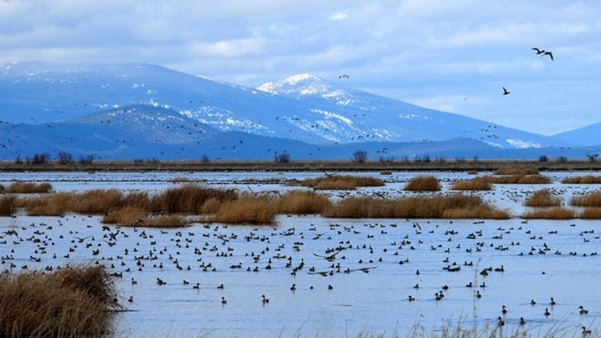 This file image shows the wetlands of the Lower Klamath National Wildlife Refuge in southern Oregon.