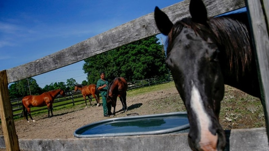 This June 16, 2014 file photo shows horse in Wallkill, New York.