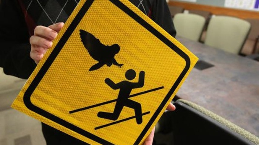 The owls of Oregon can be mean, but at least Salem parkgoers have been warned. (Courtesy: Statesman Journal)