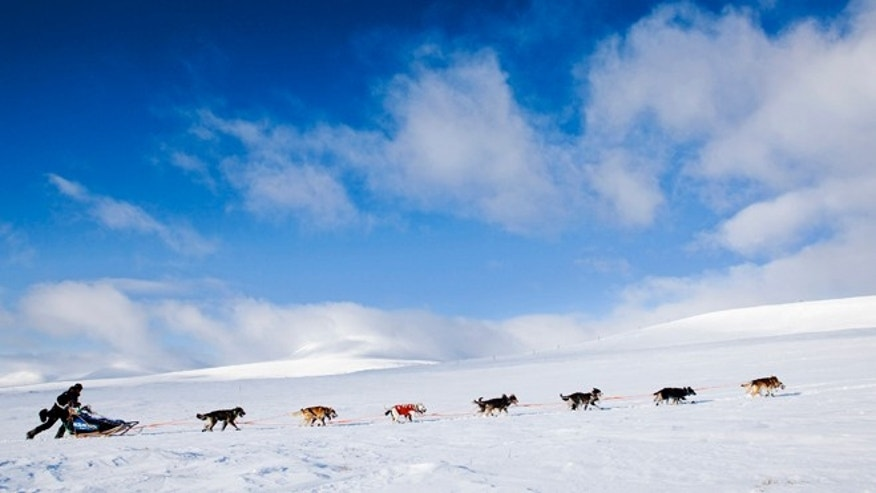 FILE: A dogsled race team in Finnmark County, northern Norway.