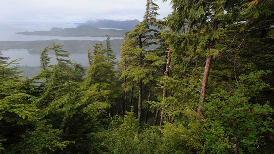 Shown here is  Tongass National Forest.