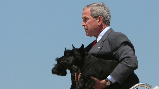 U.S. President George W. Bush carries his pet dogs Barney (front) and Miss Beazley off Air Force One at Andrews Air Force base near Washington August 13, 2006. Bush returned to Washington from an 11-day vacation on his ranch in Texas.   REUTERS/Jason Reed    (UNITED STATES) - RTR1GCRJ