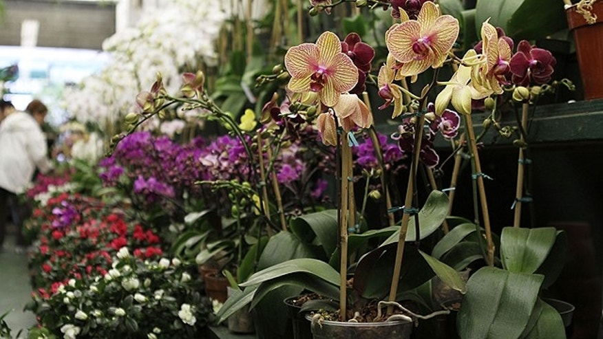 Orchids for sale at Foliage Garden