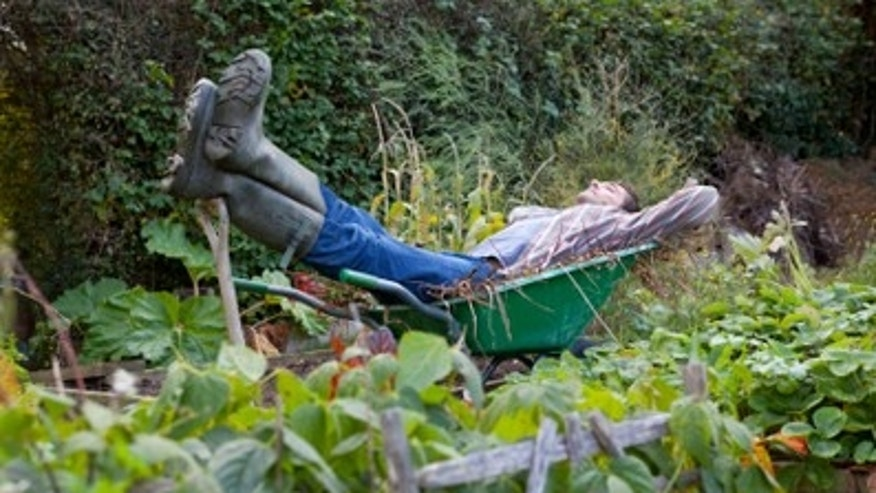 Lazy Gardener Sleeping in Wheelbarrow