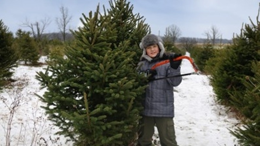 Tips On Keeping The Holiday Spirit And Your Tree Alive